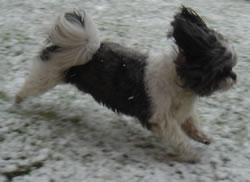 Snowy Sammy