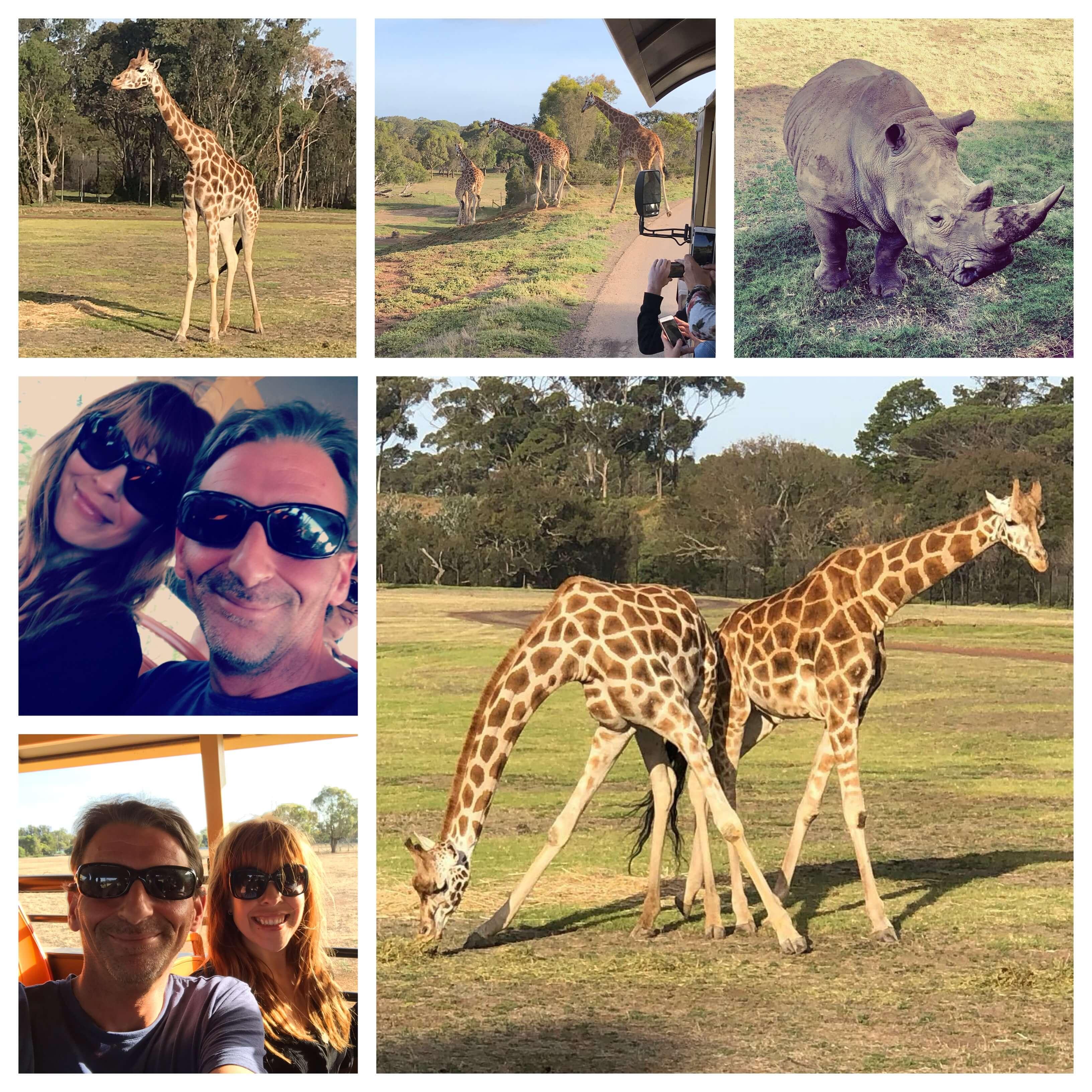 Twilight Safari